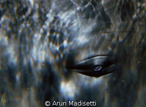 normally an image of an eyeball would be macro, not in th... by Arun Madisetti 